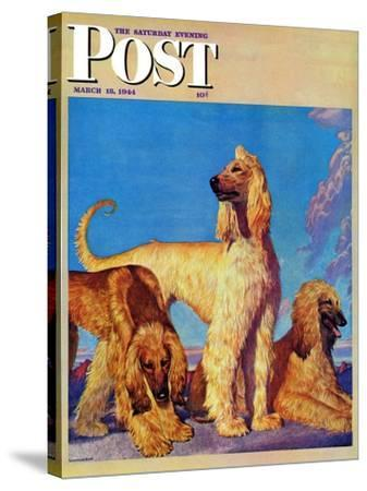 """Afghan Hounds,"" Saturday Evening Post Cover, March 18, 1944-Rutherford Boyd-Stretched Canvas Print"