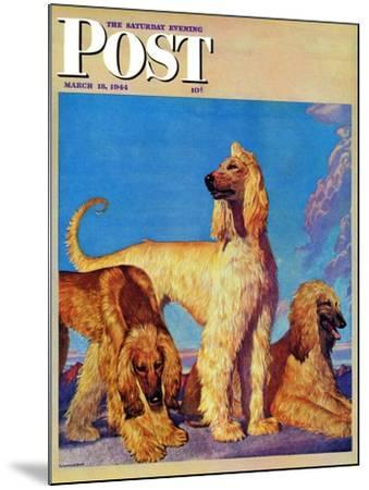 """Afghan Hounds,"" Saturday Evening Post Cover, March 18, 1944-Rutherford Boyd-Mounted Giclee Print"