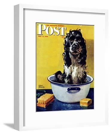 """""""Butch Gets a Bath,"""" Saturday Evening Post Cover, May 11, 1946-Albert Staehle-Framed Premium Giclee Print"""