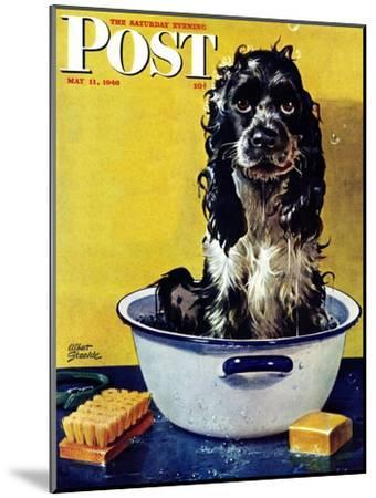"""""""Butch Gets a Bath,"""" Saturday Evening Post Cover, May 11, 1946-Albert Staehle-Mounted Premium Giclee Print"""