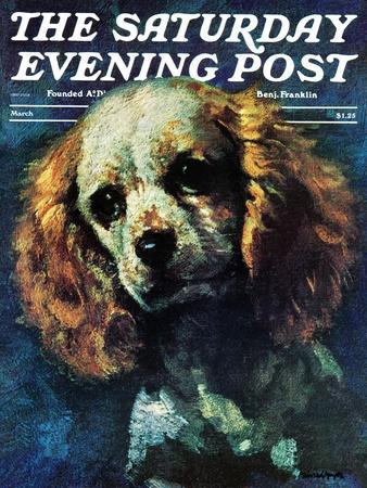 """""""Cocker Spaniel,"""" Saturday Evening Post Cover, March 1, 1975-L^ Mayer-Framed Giclee Print"""