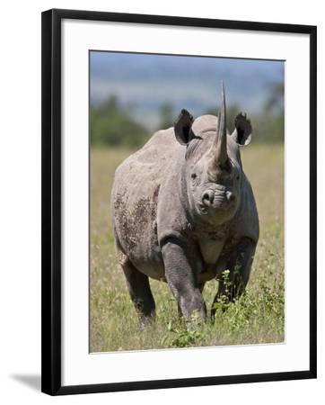 An Alert Black Rhino; Mweiga, Solio, Kenya-Nigel Pavitt-Framed Photographic Print