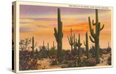 Saguaro Cacti--Stretched Canvas Print