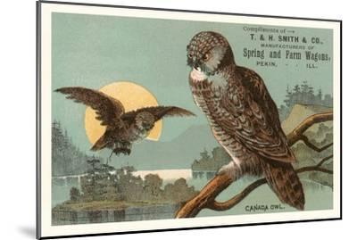 Canada Owls--Mounted Art Print