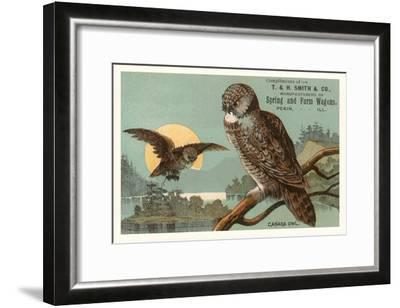 Canada Owls--Framed Art Print