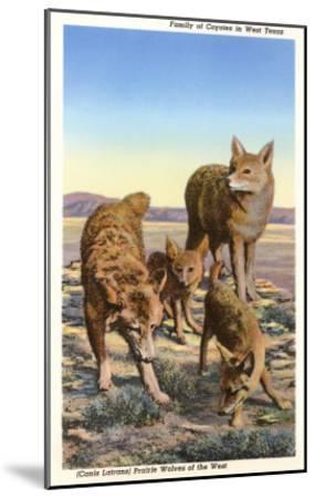 Coyote Family--Mounted Art Print