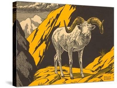 Woodcut of Dalls Sheep--Stretched Canvas Print