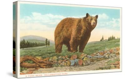 Park Bear, Yellowstone National Park--Stretched Canvas Print