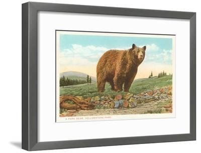 Park Bear, Yellowstone National Park--Framed Art Print