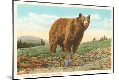 Park Bear, Yellowstone National Park--Mounted Art Print