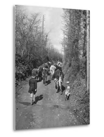 Boy and His Dog Driving the Cows in for Milking--Metal Print