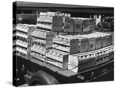 A Truckload of Freshly Harvested Canteloupes in Crates--Stretched Canvas Print