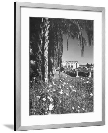 A Synagogue in the Ancient City of Capernaum, Flowers and Palm Trees in the Foreground--Framed Photographic Print