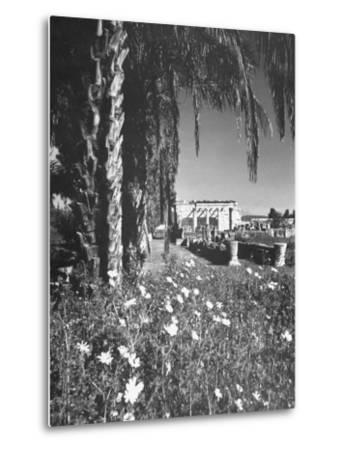 A Synagogue in the Ancient City of Capernaum, Flowers and Palm Trees in the Foreground--Metal Print