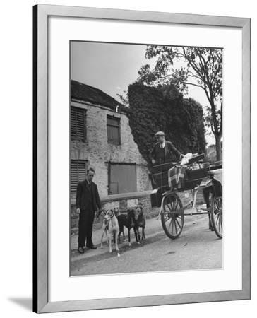Greyhound Racing Dogs Being Walked--Framed Photographic Print