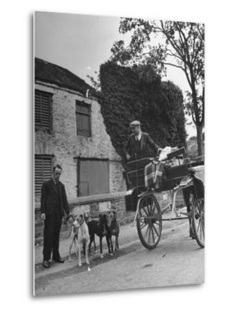 Greyhound Racing Dogs Being Walked--Metal Print