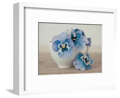 Pansies-Ian Winstanley-Framed Giclee Print