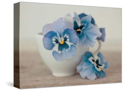 Pansies-Ian Winstanley-Stretched Canvas Print