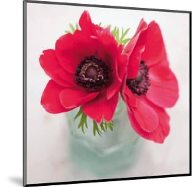 Red Anemones-Ian Winstanley-Mounted Giclee Print