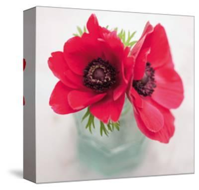 Red Anemones-Ian Winstanley-Stretched Canvas Print