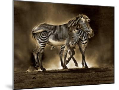 Zebra Grevys-Marina Cano-Mounted Giclee Print