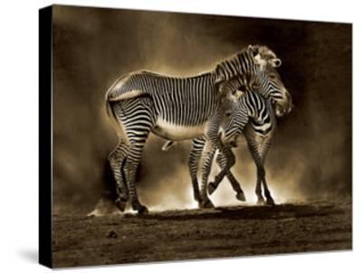 Zebra Grevys-Marina Cano-Stretched Canvas Print