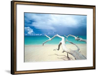 Driftwood, Antigua-Ian Cumming-Framed Giclee Print