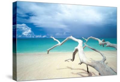 Driftwood, Antigua-Ian Cumming-Stretched Canvas Print