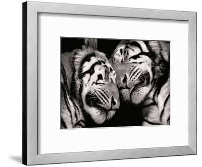 Sleeping Tigers-Marina Cano-Framed Giclee Print