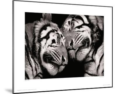 Sleeping Tigers-Marina Cano-Mounted Giclee Print