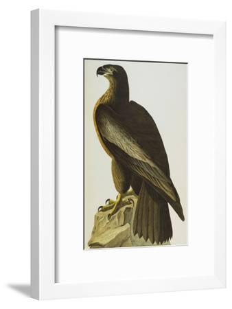 The Bird of Washington Bald Eagle (Haliaeetus Leucocephalus), Plate XI, from 'The Birds of America'-John James Audubon-Framed Giclee Print
