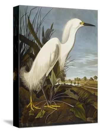 Snowy Heron or White Egret / Snowy Egret (Egretta Thula), Plate CCKLII, from 'The Birds of America'-John James Audubon-Stretched Canvas Print