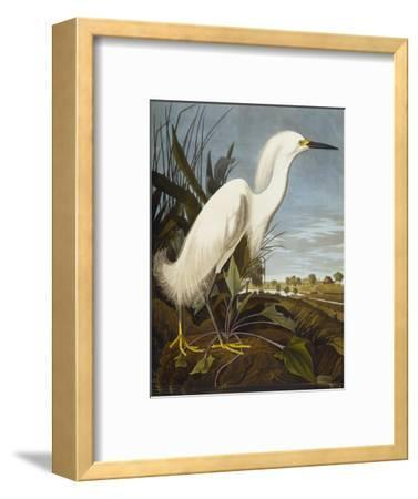 Snowy Heron or White Egret / Snowy Egret (Egretta Thula), Plate CCKLII, from 'The Birds of America'-John James Audubon-Framed Premium Giclee Print