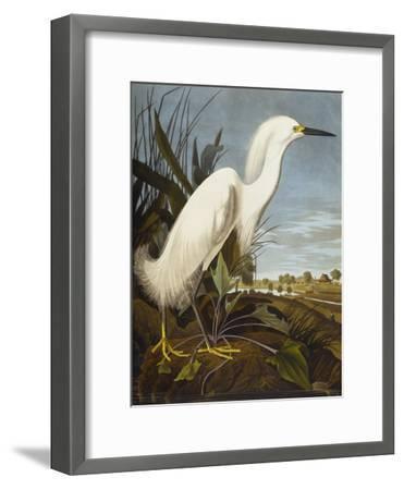 Snowy Heron or White Egret / Snowy Egret (Egretta Thula), Plate CCKLII, from 'The Birds of America'-John James Audubon-Framed Giclee Print