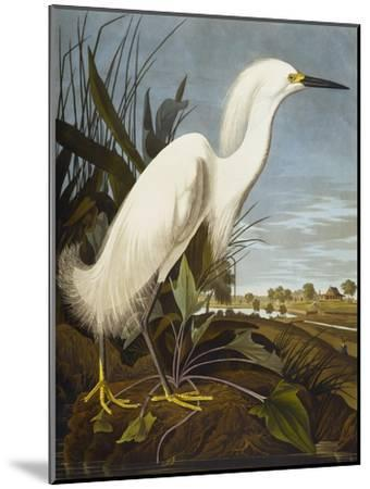 Snowy Heron or White Egret / Snowy Egret (Egretta Thula), Plate CCKLII, from 'The Birds of America'-John James Audubon-Mounted Giclee Print