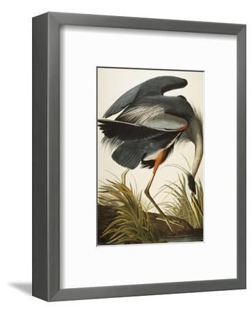 Great Blue Heron (Ardea Herodias), Plate Ccxi, from 'The Birds of America'-John James Audubon-Framed Premium Giclee Print