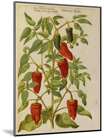 Indian Pepper. from 'Camerarius Florilegium'-Joachim Camerarius-Mounted Premium Giclee Print