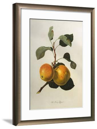 The Kerry Pippin, from 'Pomona Londinensis'-William Hooker-Framed Giclee Print