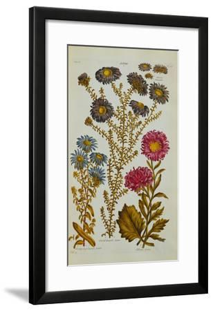 The Vegetable System: Aster-John Hill-Framed Giclee Print