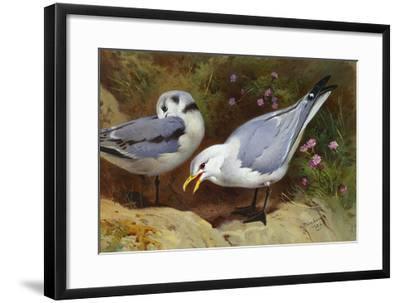 Kittywake Gulls-Archibald Thorburn-Framed Giclee Print
