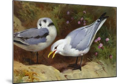 Kittywake Gulls-Archibald Thorburn-Mounted Giclee Print