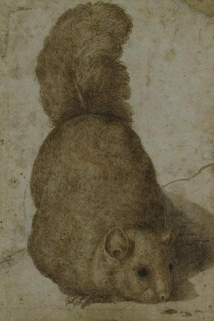 A Squirrel-Giovanni da Udine (Attr to)-Stretched Canvas Print