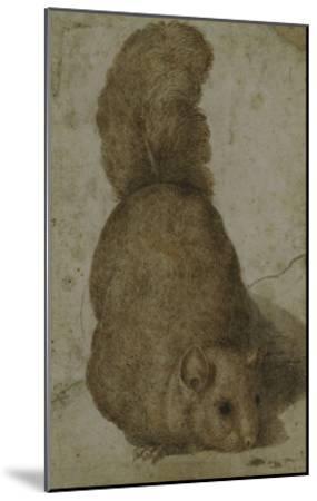 A Squirrel-Giovanni da Udine (Attr to)-Mounted Giclee Print