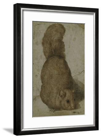 A Squirrel-Giovanni da Udine (Attr to)-Framed Giclee Print