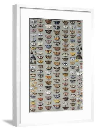 One Hundred and Sixty Six Moths Belonging to Several Families, But Mostly Noctuidae and Geometridae-Marian Ellis Rowan-Framed Giclee Print