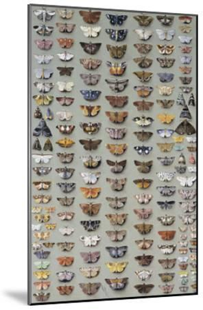 One Hundred and Sixty Six Moths Belonging to Several Families, But Mostly Noctuidae and Geometridae-Marian Ellis Rowan-Mounted Giclee Print