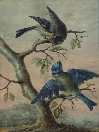 A Kingfisher on a Sapling; and a Blue Tit with a Finch on a Sapling-Christoph Ludwig Agricola-Premium Giclee Print