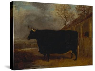 A Black Bull Standing by a Cowshed, an Extensive Landscape Beyond-James Pollard-Stretched Canvas Print