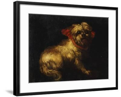 Maltese Terrier with a Red Collar- School of Madrid-Framed Giclee Print