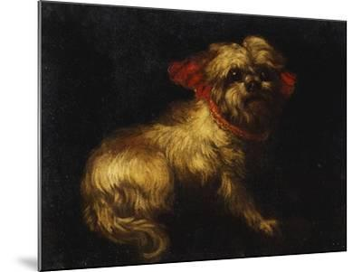 Maltese Terrier with a Red Collar- School of Madrid-Mounted Giclee Print